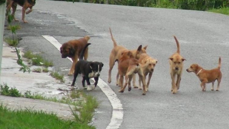 Δήμος Βέροιας : Κάποιοι συμπολίτες μας παρεμποδίζουν την περισυλλογή των επικίνδυνων σκύλων