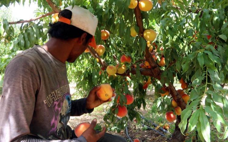 Συγκέντρωση αιτήσεων ενδιαφερομένων να εργαστούν ως εποχικοί εργάτες και εργάτες γης από το Δήμο Βέροιας