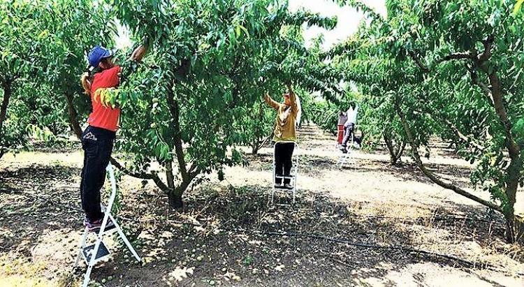 Ξεκίνησε η συγκέντρωση αιτήσεων ενδιαφερομένων να εργαστούν ως εποχικοί εργάτες και εργάτες γης από το Δήμο Βέροιας