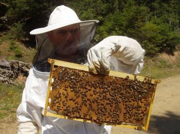 Π.Ε. Ημαθίας : Συμμετοχή στο πρόγραμμα βελτίωσης των συνθηκών παραγωγής και εμπορίας των προϊόντων μελισσοκομίας για το έτος 2020