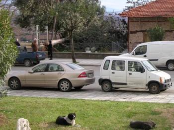 Περισυλλογή επικίνδυνων σκύλων από την περιοχή του Πάρκου Αγίων Αναργύρων πραγματοποιήθηκε από το συνεργείο περισυλλογής του Δήμου Βέροιας