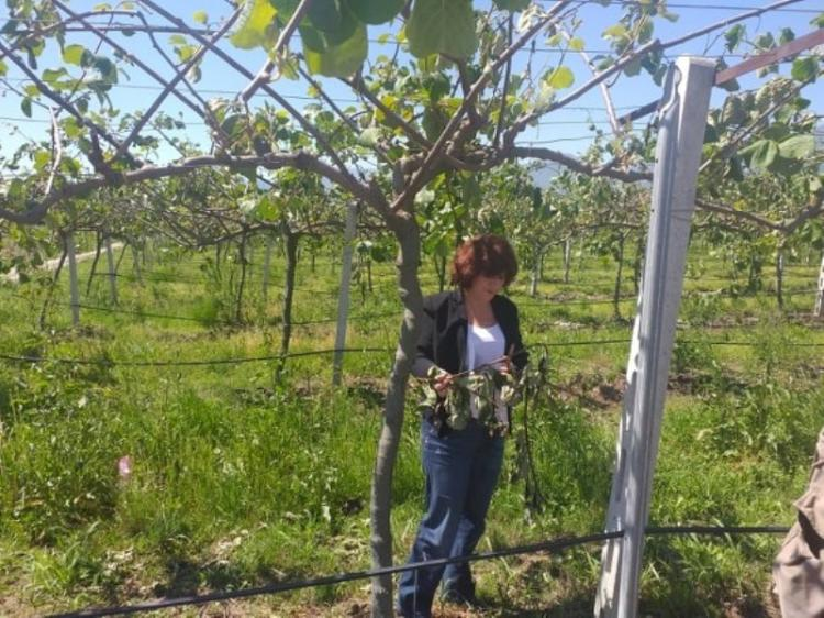 Επαφές Φρόσως Καρασαρλίδου με ΕΛΓΑ και αγρότες για τις καταστροφές από τις πρόσφατες θεομηνίες