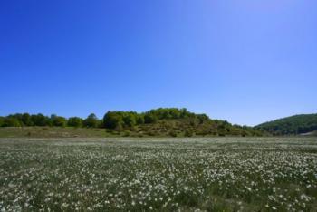 Narcissus poeticus  -Του Γιώργου Πολάκη