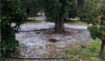 Δήμος Βέροιας : Προθεσμία υποβολής αιτήσεων επανεκτίμησης (ενστάσεις) για τη ζημιά από Χαλάζι του 2019 στις κοινότητες Μακροχωρίου και Διαβατού