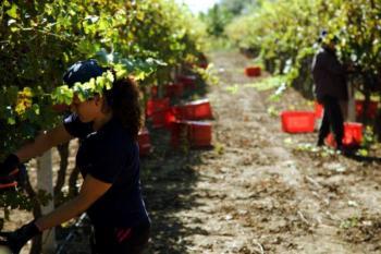 Τροπολογία για απασχόληση ανέργων σε αγροτικές εργασίες με διατήρηση του επιδόματος