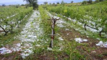 Δ.Βέροιας : Χορήγηση προθεσμίας υποβολής δηλώσεων ζημιάς από παγετό και χαλάζι στις κοινότητες Μακροχωρίου και Διαβατού