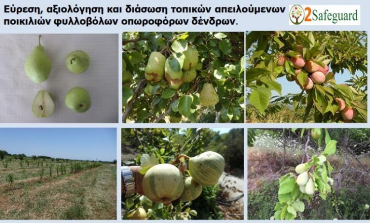 Δράσεις εύρεσης, αξιολόγησης και αξιοποίησης τοπικών ποικιλιών φυλλοβόλων οπωροφόρων δένδρων