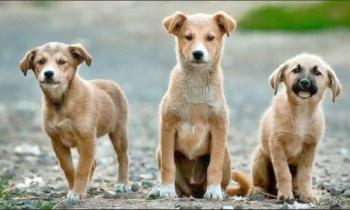 Ενημέρωση σχετικά με τη διαχείριση των αδέσποτων ζώων από το Δήμο Αλεξάνδρειας και το Δήμαρχο Παναγιώτη Γκυρίνη
