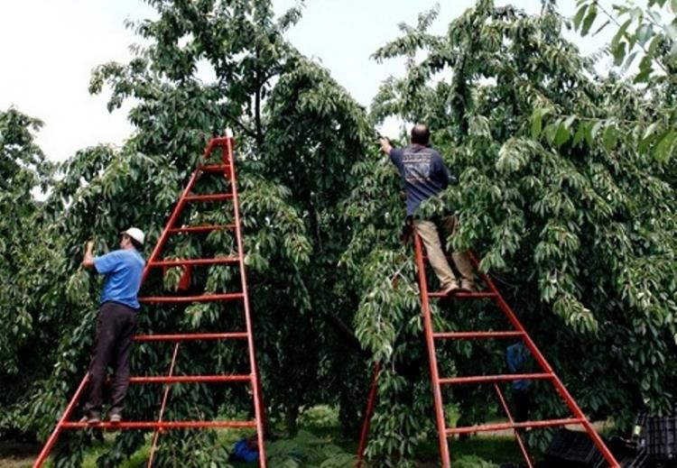 Mέχρι τέλους του 2020 η προθεσμία μετάκλησης αλλοδαπών εργατών γης