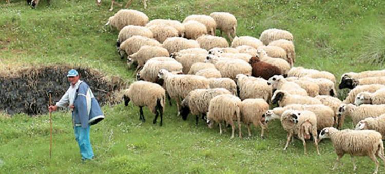 Τέλη Αυγούστου με αρχές Σεπτεμβρίου οι αποζημιώσεις στους κτηνοτρόφους