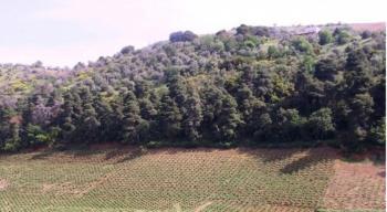 Έως τέλος Αυγούστου η προσκόμιση δικαιολογητικών για τον αποχαρακτηρισμό αγροτεμαχίων