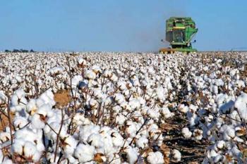1ο δελτίο γεωργικών προειδοποιήσεων ολοκληρωμένης φυτοπροστασίας στη βαμβακοκαλλιέργεια της Π.Ε. Ημαθίας