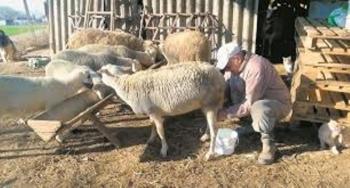 Κορωνοενισχύσεις: Ξεκαθαρίζει το τοπίο για αιγοπρόβατα και λαϊκές αγορές