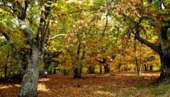 Εκδόθηκε η ΚΥΑ για την εκμετάλλευση καστανοτεμαχίων σε δάση και δασικές εκτάσεις