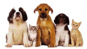 Ανακοίνωση του Δήμου Αλεξάνδρειας προς τους Ιδιοκτήτες Δεσποζόμενων Ζώων Συντροφιάς