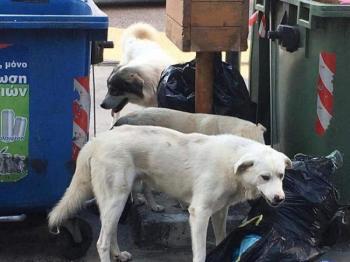 Νέο και σύγχρονο δημοτικό καταφύγιο αδέσποτων ζώων στο δήμο Νάουσας