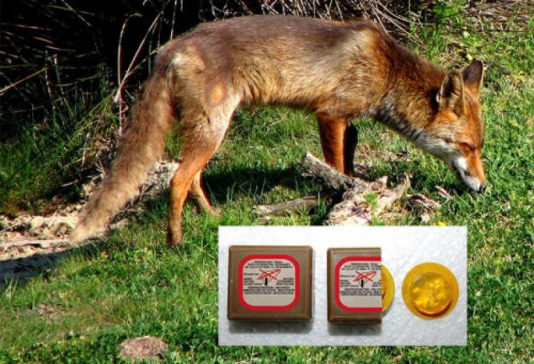 Ρίψεις εμβολίων – δολωμάτων στα πλαίσια υλοποίησης του προγράμματος κατά της λύσσας