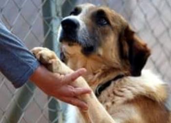 Το πρόγραμμα που εφαρμόζει ο Δήμος Βέροιας για τα κατοικίδια και αδέσποτα ζώα συντροφιάς