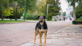 Να αλλάξει άμεσα ο νόμος για τα αδέσποτα ζώα