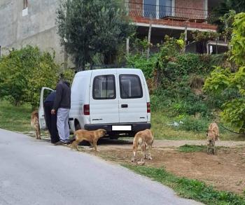 Επιχείρηση σύλληψης των επικίνδυνων αδέσποτων από το Δήμο Νάουσας