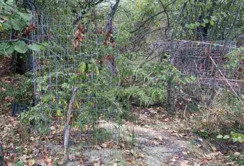 Από το Τμήμα Ασφάλειας Βέροιας συνελήφθησαν δύο άτομα στην Ημαθία για καλλιέργεια και διακίνηση κάνναβης