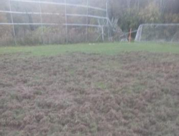 Αγέλες αγριογούρουνων όργωσαν γήπεδο της Ημαθίας!