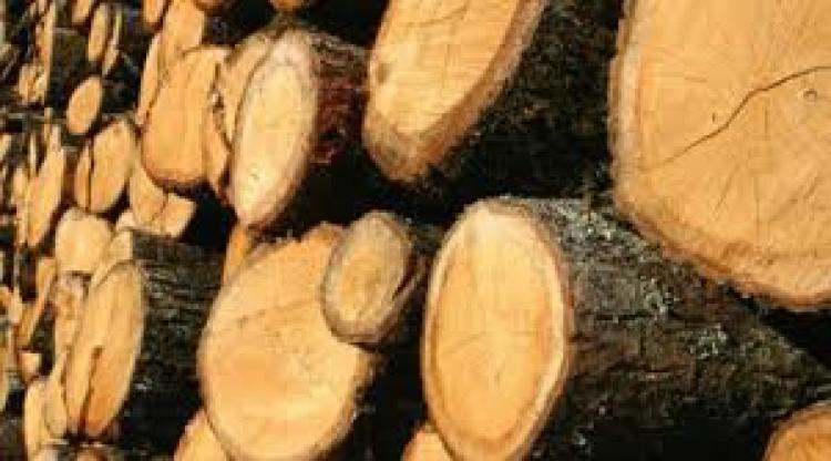 Προκήρυξη εκποίησης ξυλείας