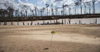 Κορωνοϊός : Η φύση μας εκδικείται