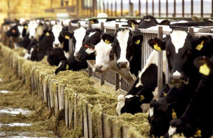 Προθεσμία σε κτηνοτρόφους έως τις 4 Δεκεμβρίου για τις αιτήσεις άδειας διατήρησης σταβλικών εγκαταστάσεων