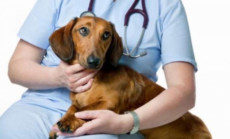 Διακόπηκε λόγω covid το πρόγραμμα εθελοντικών στειρώσεων αδέσποτων ζώων συντροφιάς στο Δήμο Βέροιας