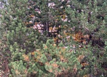 Πλήρη καρπών τα δέντρα του δάσους, έρχεται...βαρυχειμωνιά!
