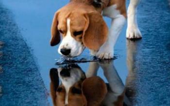 Η ΕΛ.ΑΣ. αποκτά πρόσβαση στη βάση δεδομένων του ΥπΑΑΤ για ταυτοποίηση των ιδιοκτητών ζώων συντροφιάς