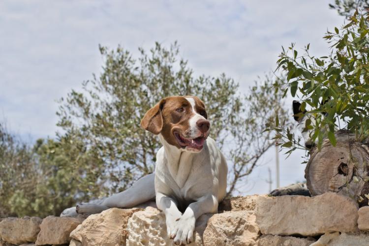 Στην ανάγκη πίστης εφαρμογής των διατάξεων για την προστασία των ζώων συντροφιάς συμφώνησαν ο ΥπΑΑΤ και ο Εισαγγελέας του Αρείου Πάγου