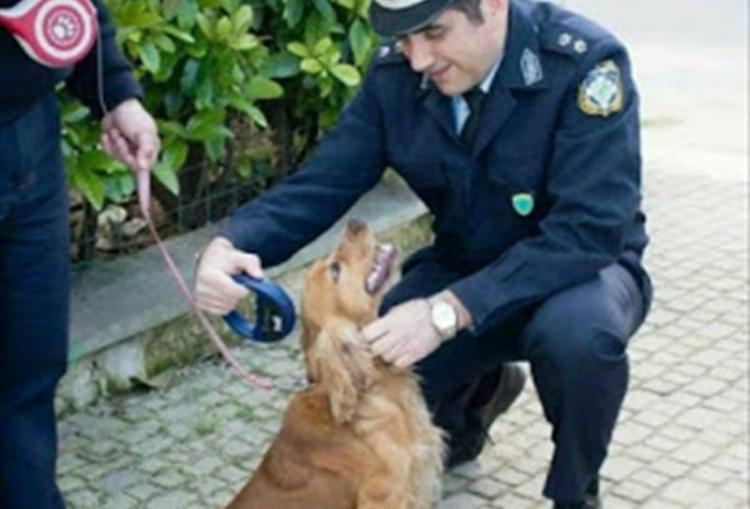 Ο Δήμος Νάουσας με τη συνδρομή της Αστυνομίας ξεκινά το επόμενο διάστημα ελέγχους για την εφαρμογή της νομοθεσίας που αφορά δεσποζόμενα ζώα συντροφιάς