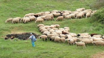 Ενημέρωση κτηνοτρόφων του νομού Ημαθίας για την κατανομή των βοσκήσιμων γαιών 2020