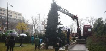 Φυσικό έλατο 10 μέτρων μεταφυτεύτηκε μπροστά στο κτίριο της Περιφέρειας Κεντρικής Μακεδονίας