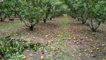 Πληρώνονται από το De Minimis, για το 2020, οι αγρότες μας!