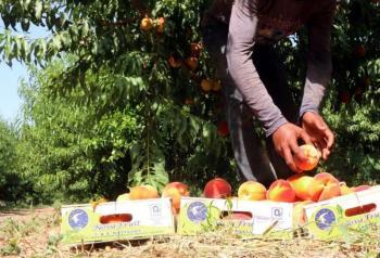 Σημαντική ρύθμιση για τους μετακλητούς εργάτες γης, αρκεί να υπάρξει...παραγωγή!