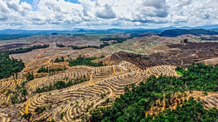 ΑΓΡΟΤΙΚΟ ΤΜΗΜΑ ΣΥΡΙΖΑ- Π.Σ. ΗΜΑΘΙΑΣ : Οι αλλαγές στη χρήση γης ευθύνονται για την εκδήλωση και τη μετάδοση των νέων ασθενειών