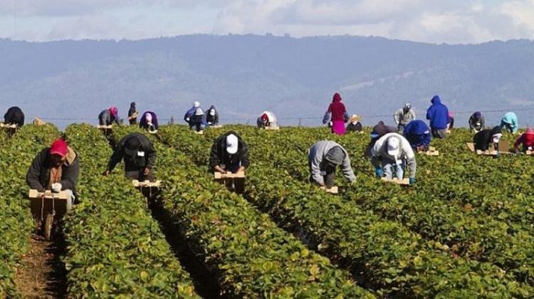 Νομοθετική πρωτοβουλία, για να δοθεί μόνιμη λύση στη μετάκληση εργατών γης από τρίτες χώρες