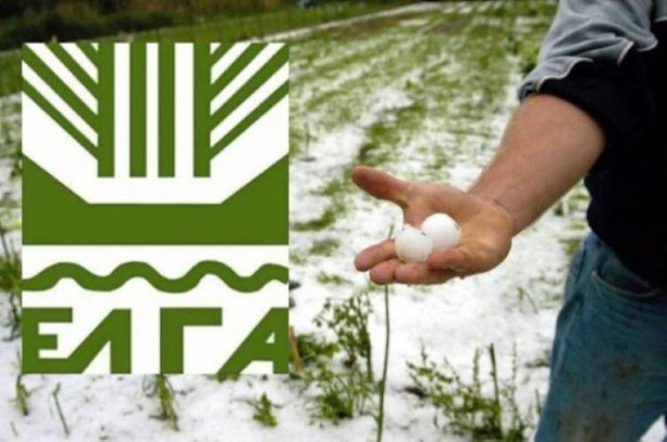 Δήμος Αλεξάνδρειας : Απεστάλησαν από τον ΕΛΓΑ τα πορίσματα εκτίμησης ζημιών από το χαλάζι της 17ης Ιουνίου 2020 στις καλλιέργειες της Τ.Κ. Λουτρού
