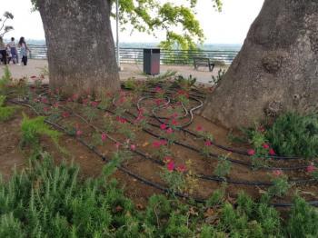 Φυτεύσεις καλλωπιστικών λουλουδιών και τοποθετήσεις κάδων στην Πλατεία Ελιάς