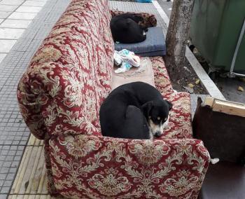 Και φιλοζωικός...καναπές στα πεζοδρόμια της Βέροιας!