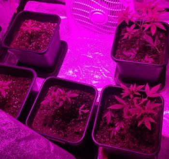 Συνελήφθη 26χρονος για υδροπονική καλλιέργεια κάνναβης, βρέθηκαν δενδρύλλια σε ντουλάπα