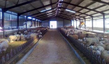 Σε δημόσια διαβούλευση το νομοσχέδιο για τις κτηνοτροφικές εγκαταστάσεις