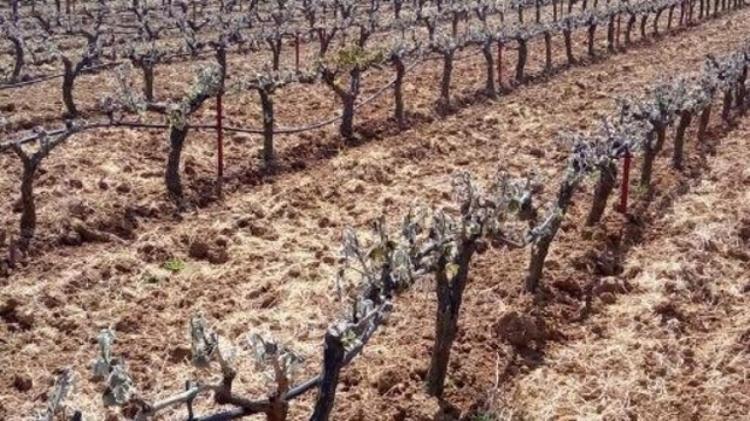 Ενημέρωση για πορίσματα επανεκτίμησης ζημιών από παγετό στις καλλιέργειες της Δ.Ε. Ειρηνούπολης