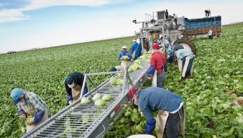Προκηρύχτηκε το Μέτρο 9 : Από 8 Ιανουαρίου αιτήσεις για την ενίσχυση νεοσύστατων Ομάδων και Οργανώσεων Παραγωγών