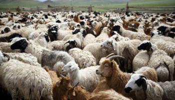 Ενισχύσεις de minimis σε κτηνοτρόφους της Ημαθίας για ζημιές σε αιγοπρόβατα και βοοειδή