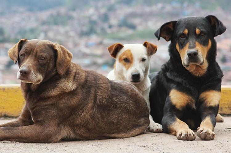 Σύλλογος Ζωόφιλων Ημαθίας Ζω.Η.: Αδέσποτα ζώα και διαχείριση από το Δήμο Βέροιας