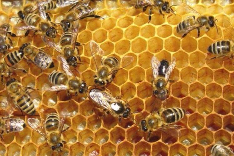 Π.Ε. Ημαθίας : Μέχρι τις 20 Ιανουαρίου οι αιτήσεις για αντικατάσταση κυψελών και στήριξης της νομαδικής μελισσοκομίας